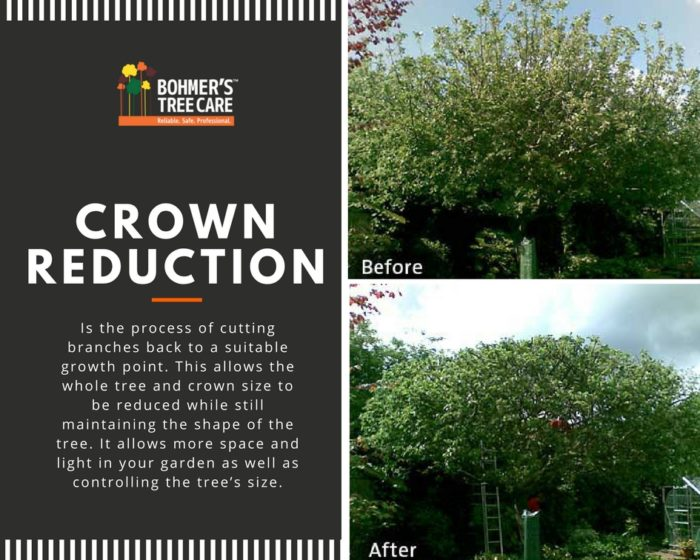 Crown Reduction Before & After Bohmer's Tree Care