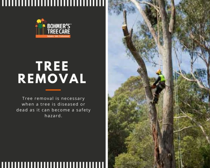 Tree Removal - Bohmer's Tree Care