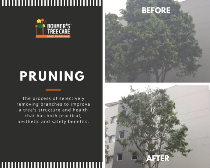 Pruning Services - Bohmer's Tree Care
