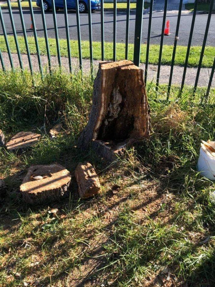 BOHMER'S TREE CARE TREE BEE COLONY