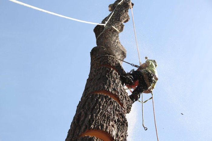 Work Bohmer's Tree Care