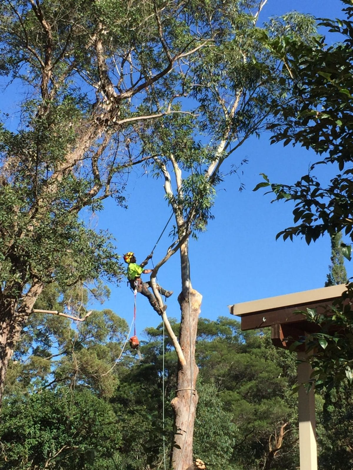 Tree Removal Bohmer's Tree Care